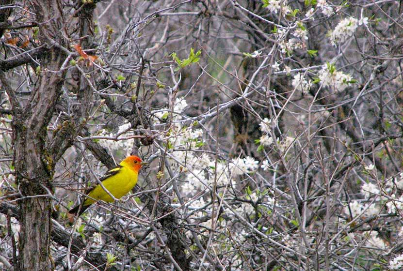 willow creek trail roxborough state park header