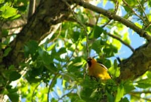 highline canal hike yellow bird