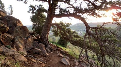 Mount Galbraith trees