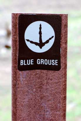 blue grouse trail marker