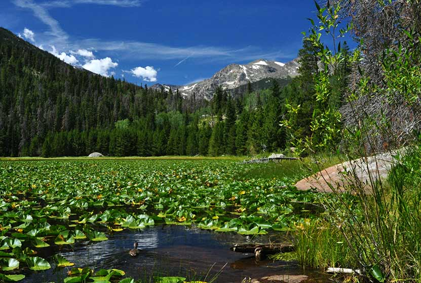 cub lake loop rocky mountain national park lily pads