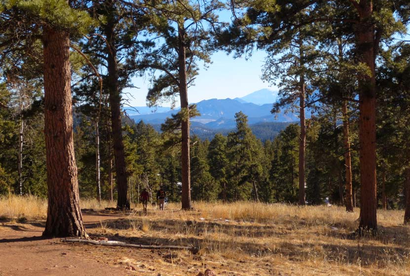 Pikes Peak in background on trail in Staunton State Park with ponderosa pines on hike near Denver Colorado