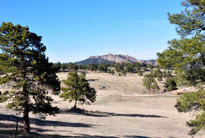 prairie meadow in foreground with ponderosa pines and ralston ridge rock formation in background at White Ranch hike near Denver