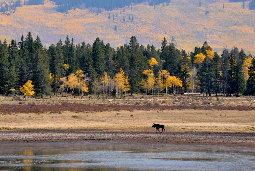 kenosha pass moose