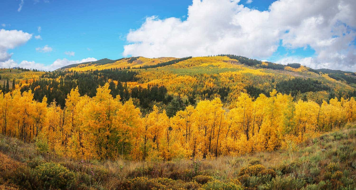 golden aspens and green pine trees on the mountains of kenosha pass colorado hikes near denver in the fall