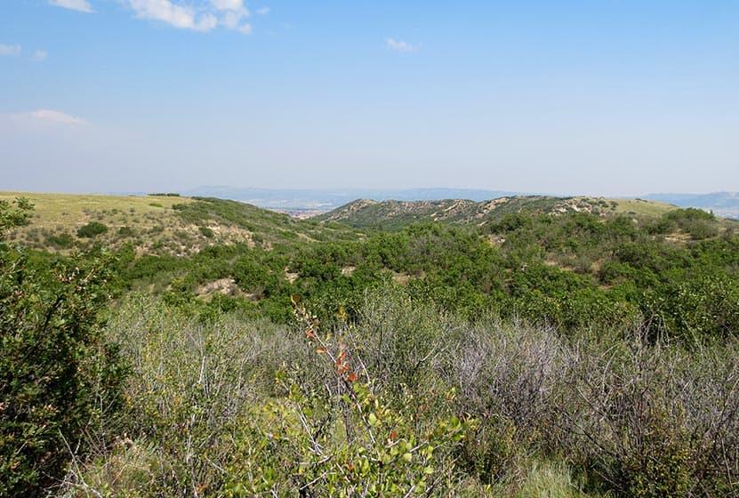 rolling grassland and gamble oaks in castle rock colorado