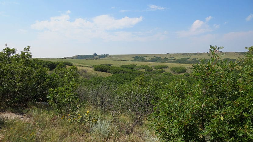 broad green meadows and puffy clouds  along the ridgeline trail in castle rock
