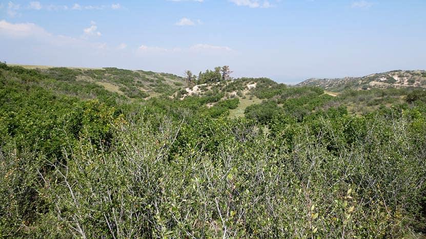rolling terrain and rock along the ridgeline trail in castle rock