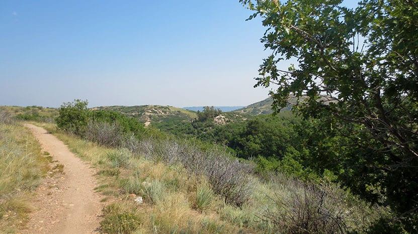 trail leading into distance with gamble oak leaves along the ridgeline trail in castle rock