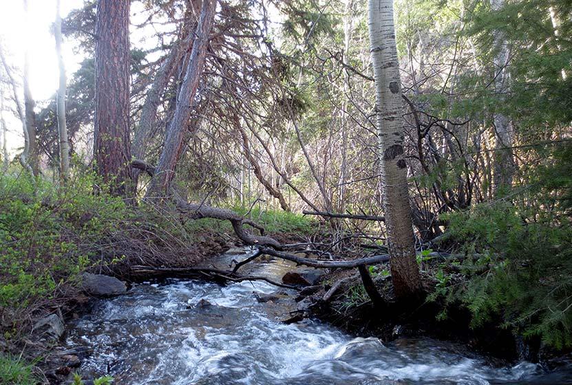 creek along the burro trail