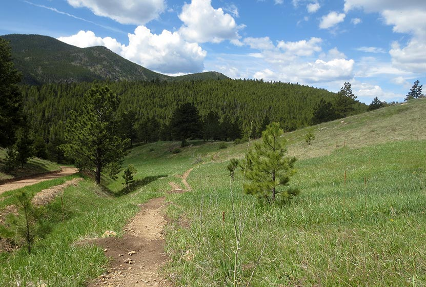 green meadows with trail in Golden Gate Canyon State Park