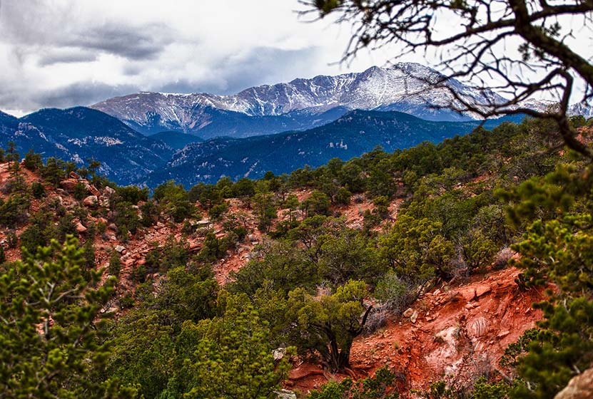 snow covered pikes peak with red sandstone and tree in foreground