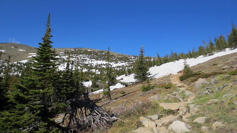 above treeline with tundra in distance and short evergreens and blue sky along st. vrain mountain trail in colorado