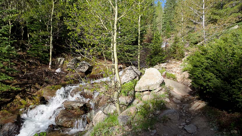 cascades among spruce and aspen trees on st. vrain mountain trail in colorado