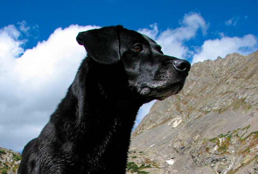 Black Lab Dog in mountains with clouds hike near denver