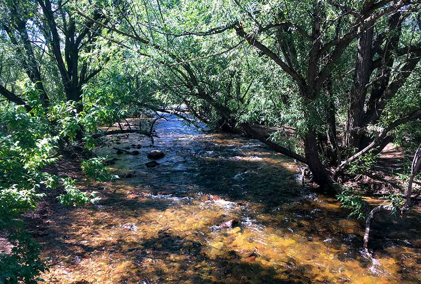 Boulder Creek at South Mesa Trailhead with willow trees arching over the creek