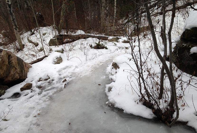 icy trail along oxen draw trail at reynolds park near conifer colorado