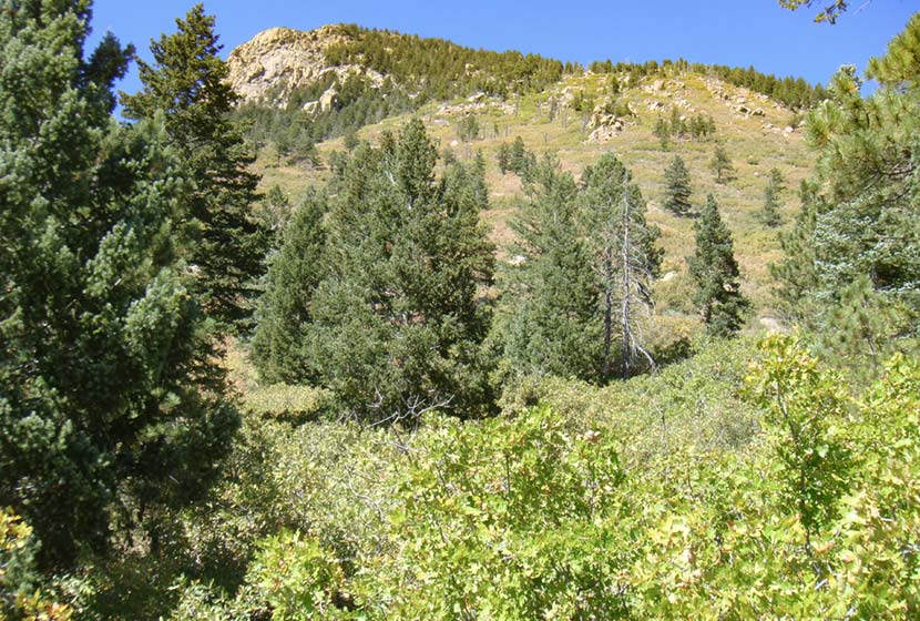 blodgett peak open space near beginning of trail with green foothill in background near colorado springs