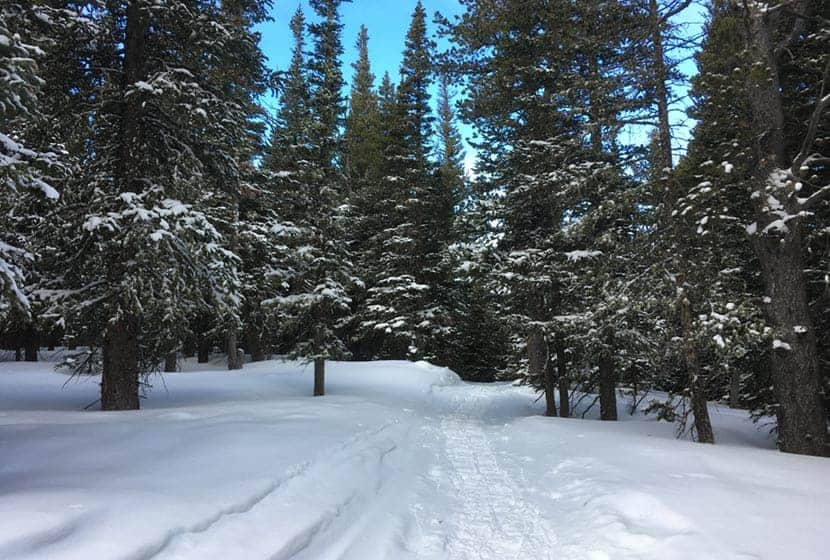fresh snow on trail at brainard lake with evergreen trees in background of hiking trail