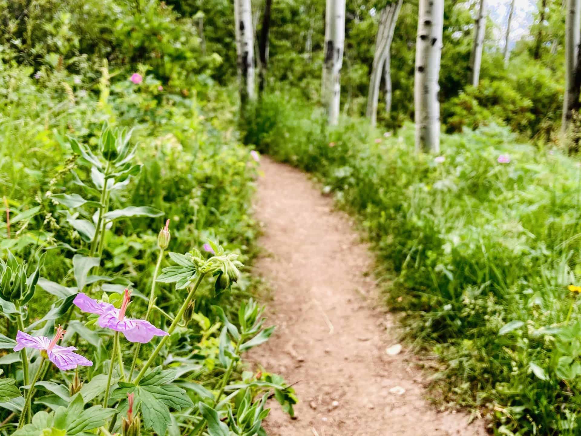 wildflowers along Indian creek