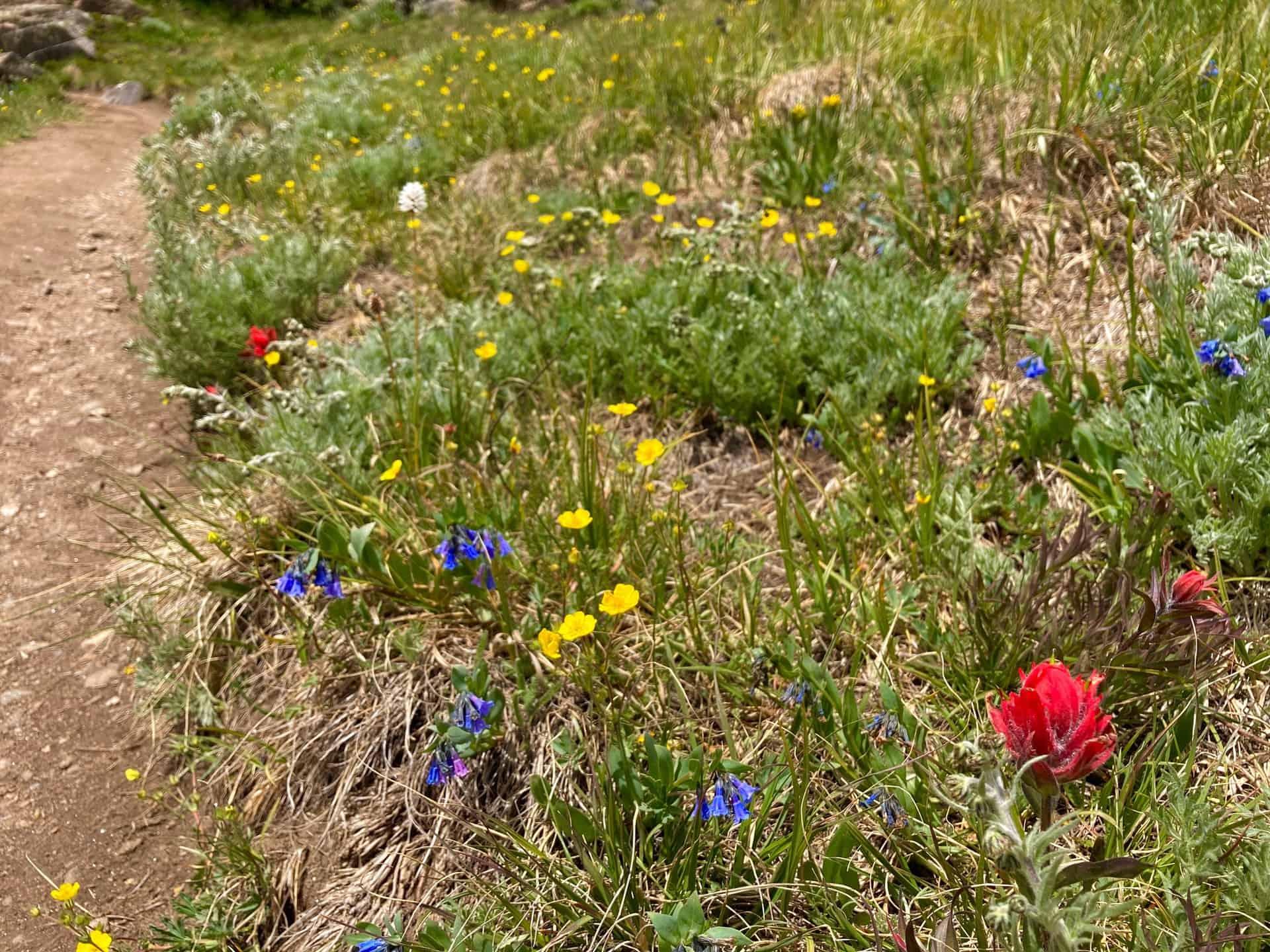 wildflowers along Silver Dollar Trail