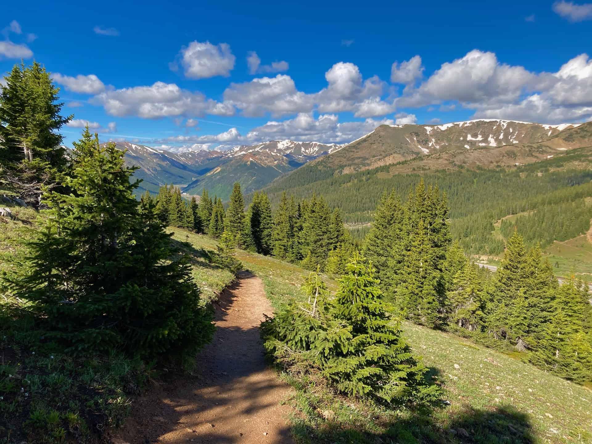 forest trail along mt. flora route