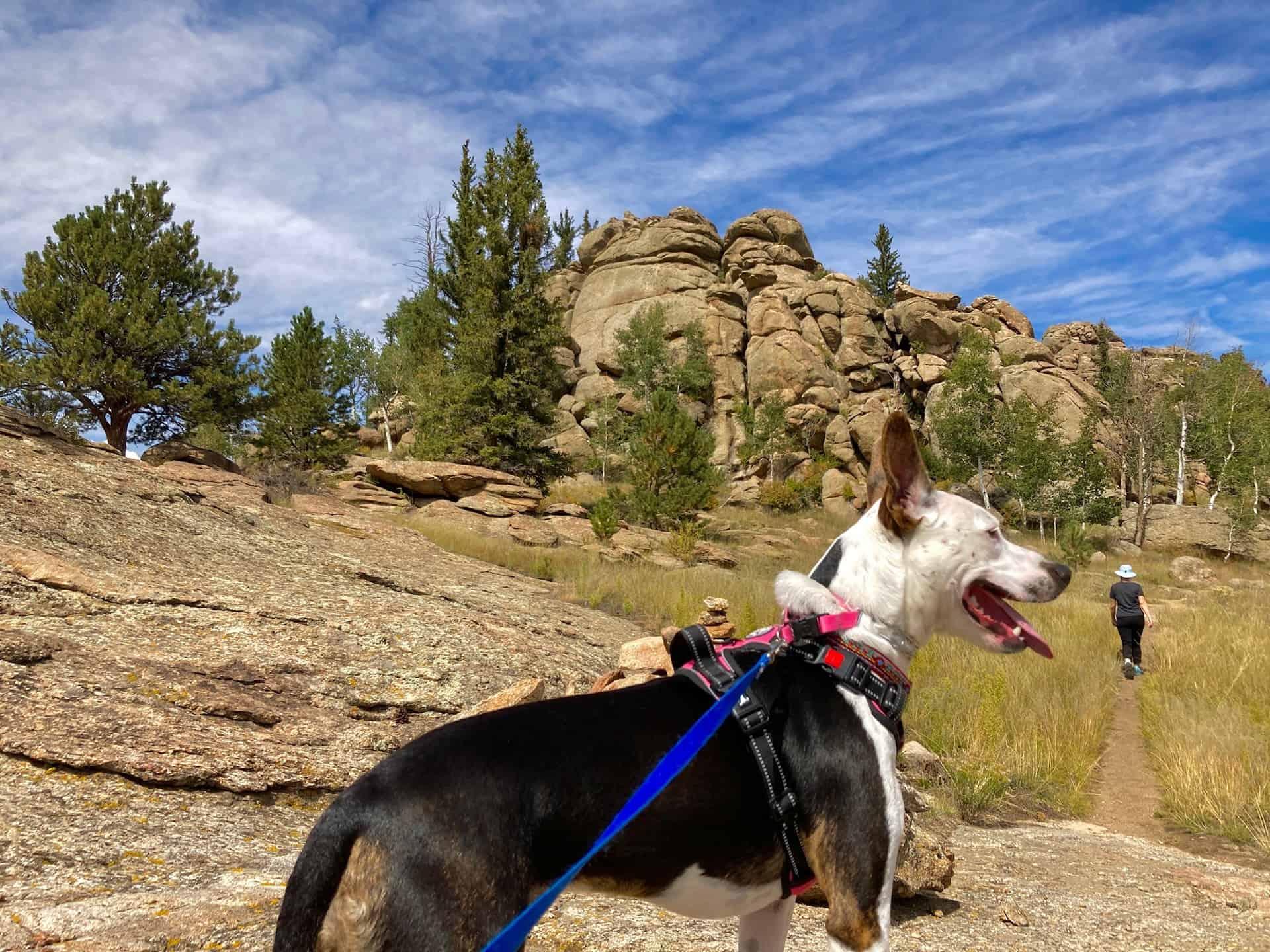 dog on leash at coyote ridge
